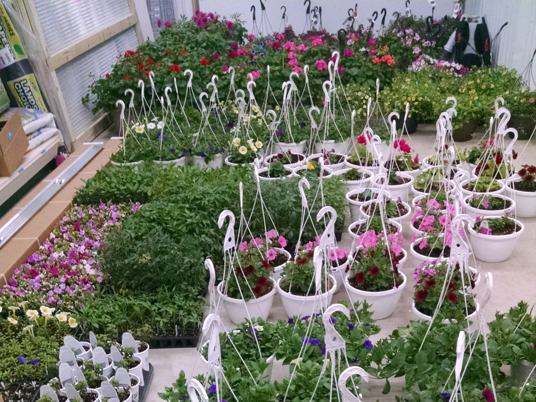 Why shop for plants at a local nursery?